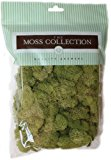 Quality Growers Preserved Reindeer Moss, 108.5 Cubic Inch, Spring Green