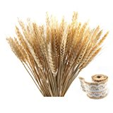Etyhf Golden Dried Natural Wheat Sheave Bundle Premium Fall Arrangements with Natural Laces Burlap Craft Lace Ribbon Roll for DIY Wedding Home Kitchen Decoration