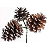 Factory Direct Craft Package of 12 Natural Frosted Pinecone Picks- 3 Pinecones on Each Pick