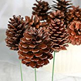 Factory Direct Craft Package of 12 Natural Lacquered Pinecone Picks