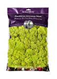 Super Moss 21669 Reindeer Moss Preserved, Chartreuse, 8oz (200 cubic inch)